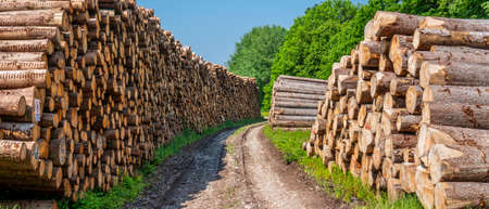 Storage place for wood logs Stock Photo