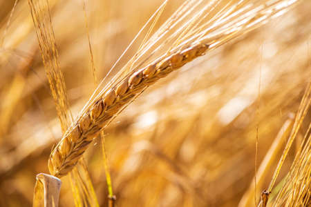 Agriculture and arable farming with cereals