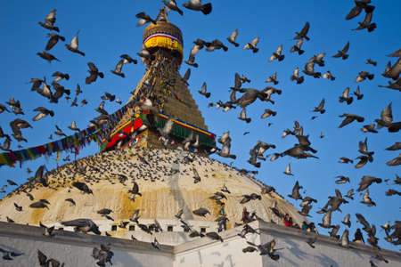 KATHMANDU, NEPAL - APRIL 14, 2010: Crowding of pigeons are flying over the great Bodhnath stupa in Kathmandu, Nepal. The buddhist religion monument is a renown architecture of Nepal Editorial