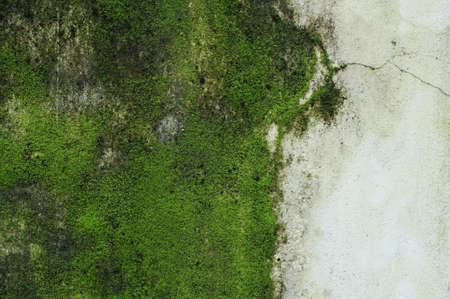 Green Moss on wall.