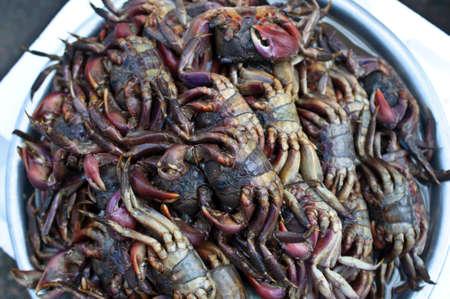 Field crab