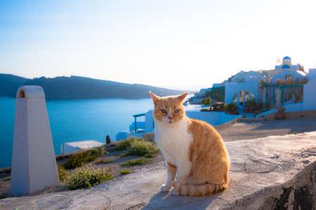 A cat in Santorini Stock Photo - 53290083