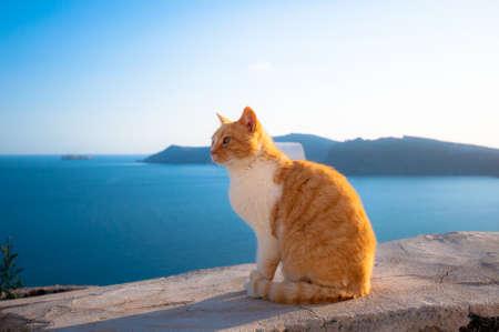 A cat in Santorini