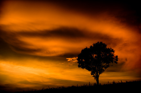 Tree with cold light ,Khao Yai National Park