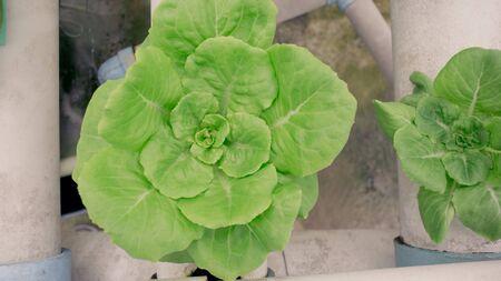 Vegetable Reklamní fotografie