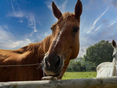 Portrait of a donkey close up, blue sky background