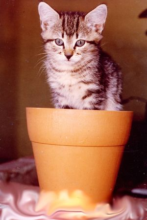 Kitten sitting in pot