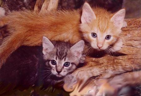 2 Kittens on tree