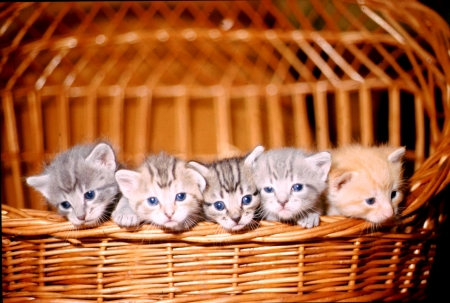 5 kittens in a wicker basket