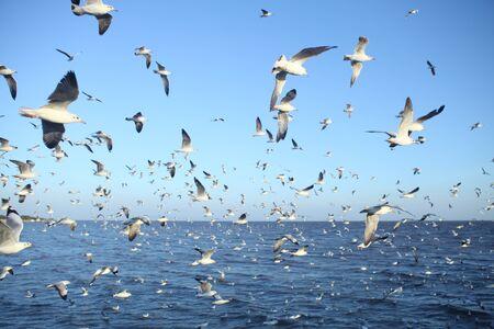 baptize: seagull Stock Photo