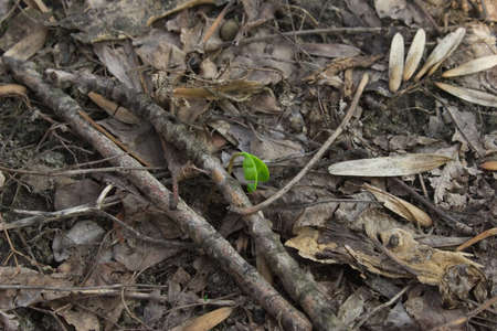 First spring sprout photo