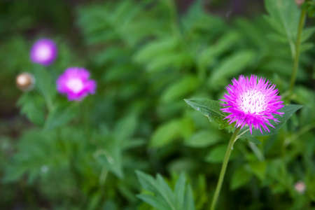 pokey: Pink flower on a pink flowers background