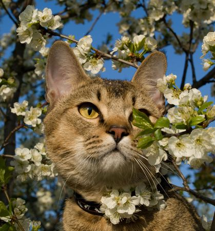 The cat is in flowers