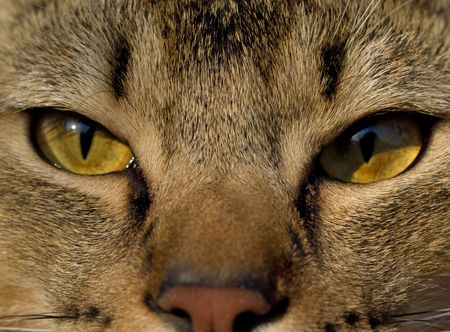 Cat`s eyes