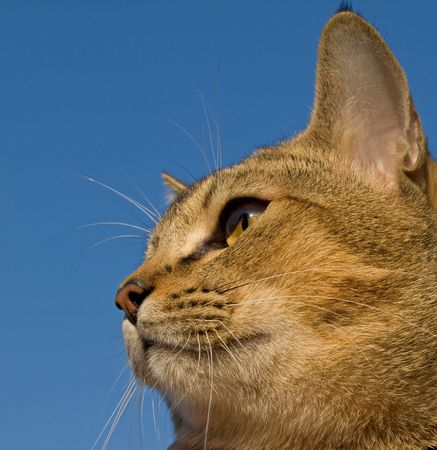 The cat is against the blue sky