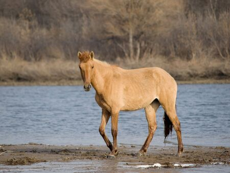 horse in river Stock Photo