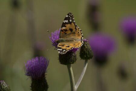 lombriz de tierra: mariposa