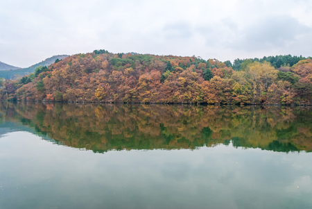 Changing leaves over Nami island, South korea photo
