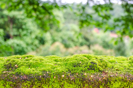 Moss, small flowerless plant that usually grow in dense green clumps or mats photo