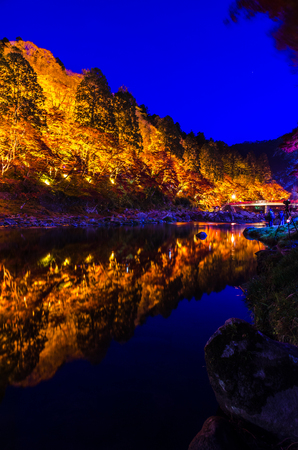 lightup: Light-up of Colorful Autumn Leaf Season in Japan