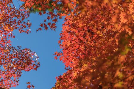 koyo: Colorful Autumn Leaf Season in Japan