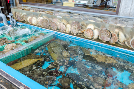 coquille: Fresh scallops in the market Stock Photo