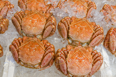 nijo: Japanese hairy crabs in the market (Taraba) Stock Photo