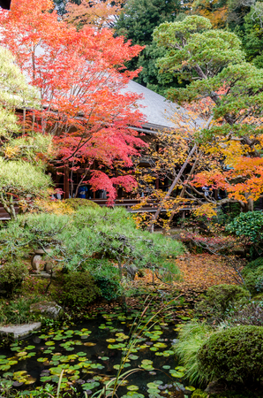koyo: Japanese style garden in autumn (Koyo)