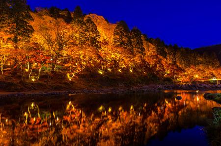 hojas de arbol: Light-up de color Temporada hoja del oto�o en Jap�n Foto de archivo