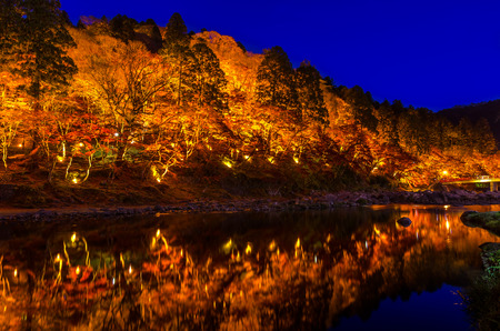 colorful leaves: Light-up of Colorful Autumn Leaf Season in Japan