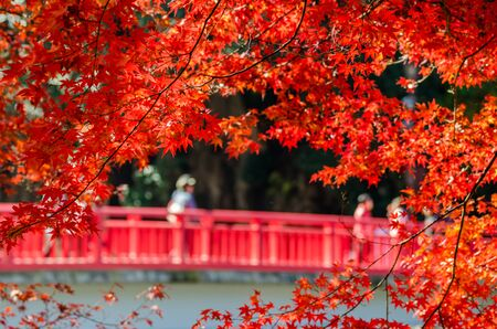 japan: Colorful Autumn Leaf with red bride in background Stock Photo