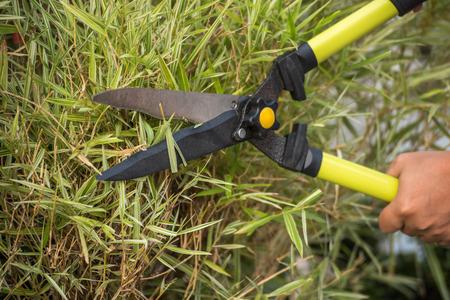 shear: Cutting grass by using shear or clipper