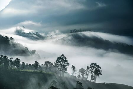Mist covering tree on the mountain with sunlight Stock Photo