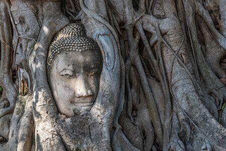Head of the Buddha image at the root of the pipal tree at Wat Mahathat  (Temple of the Great Relic). A Buddhist temple in Ayutthaya