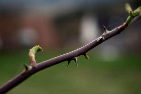 Macro stick