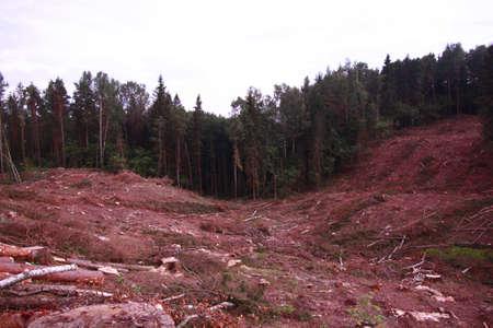 deforestacion: deforestaci�n