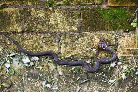 snakes for breakfast Stock Photo - 11023712