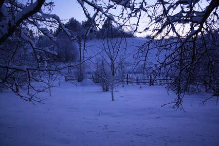 winter garden: winter garden