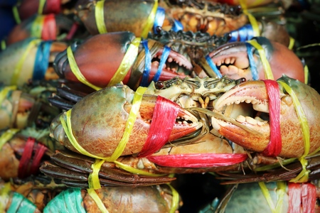 Scylla serrata is sea crab, its very popular seafood. Sea crab have very big claw. Seafood on the street at seafood market.