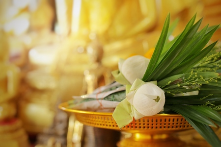Lotus flowers for buddha. Making merit of thai culture.