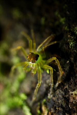 Extreme macro shot of green spider in the nature. Yellow spider is very small on stone background. Selective focus and free space for text.