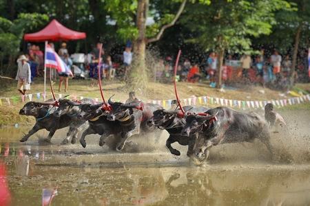 CHONBURI,THAILAND-2017,16 JULY:Buffalo racing festival in Thailand. Every year, farmers will bring buffaloes to race for fun before farming season. Culture of farmers in CHONBURI, THAILAND. 報道画像