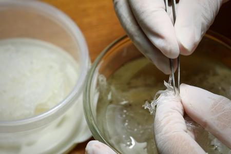 Le nid de Swiftlet Nid comestible, matériaux de nid d'oiseau comestibles crus pour la médecine traditionnelle chinoise. La soupe au nid comestible est populaire à Hong Kong, à Taiwan, en Chine et en Asie du Sud-Est. Mise au point sélective. Banque d'images