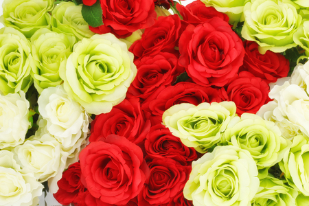 Beautiful roses for background. Selective focus and toned image. Stock Photo