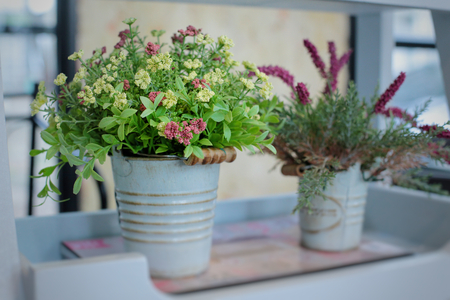 Flowers in pot, decorate in house, interior design and free space for text. Stock Photo