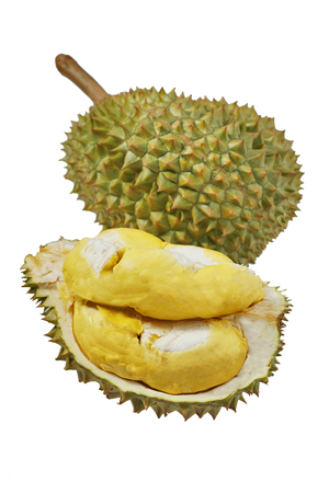 Still life photography of Durian the king of tropical fruits on white background with path, shooting in studio. Popular dessert in Thailand served with sticky rice and fresh coconut milk on topping. 版權商用圖片