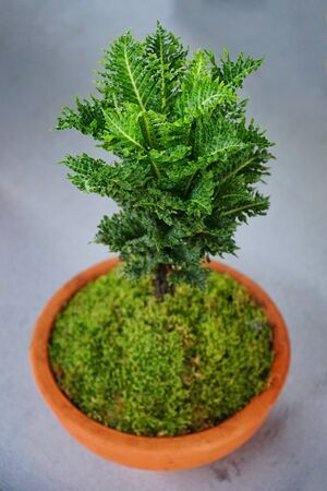 Small tree fern in pot, Selective focus and free space for text. Stockfoto