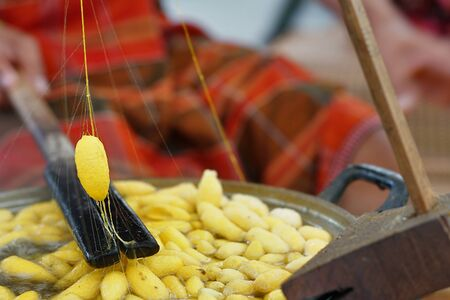 How to processing thai silk thread form cocoon. Selective focus and motion blur in action. Stockfoto