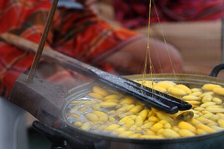 Boiling cocoon in pot. How to processing thai silk thread form cocoon. Selective focus and motion blur in action.
