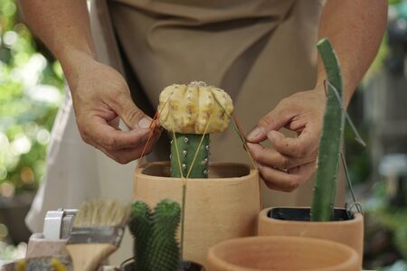 Asian man recreation with grafting cactus at home.  Selective focus, Park and garden ideas concept.